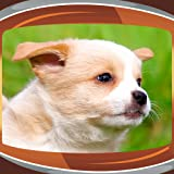 Los cachorros Live Wallpapers